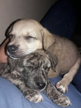 Scruffy and Blondie having a nap